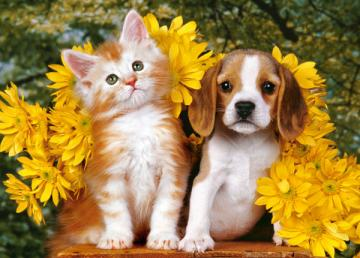 Kitten, Puppy and Flowers, Puzzle 108 Te · CAS 010134 ·  Castorland