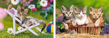 Kittens in the Garden,2x Puzzle(165+300) · CAS 021116 ·  Castorland