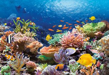 Coral Reef Fishes,Puzzle 1000 Teile · CAS 1015112 ·  Castorland