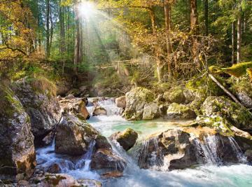 The forest stream,Puzzle 2000 Teile · CAS 2003822 ·  Castorland