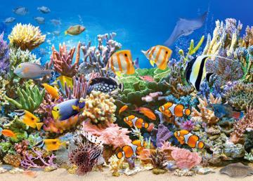 Colours of the Ocean,Puzzle 260 Teile · CAS 272791 ·  Castorland