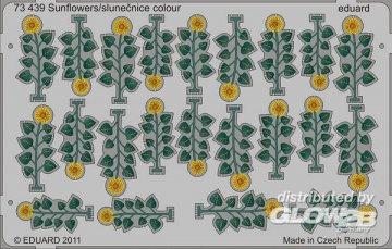 Sunflowers/slunecnice colour · EDU 73439 ·  Eduard · 1:72