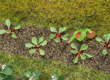 28 Rhabarberpflanzen · FAL 181273 ·  Faller
