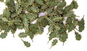 Grüne Eichenblätter · PM 35252 ·  plusmodel · 1:35