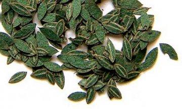 grüne Kirsch-Blätter · PM 35283 ·  plusmodel · 1:35