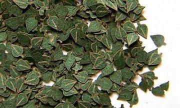 grüne Birken-Blätter · PM 35284 ·  plusmodel · 1:35